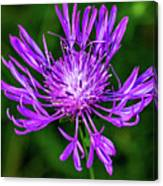 Perfectly Purple Canvas Print