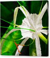 Perfumed Spider Lilly Digital Watercolor Canvas Print