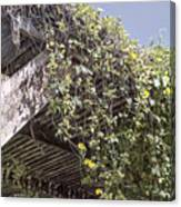 Pergola And Vines Canvas Print