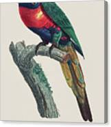 Perruche A Tete Bleue, Male / Rainbow Lorikeet, Male - Restored 19th Cent. Illustration By Barraband Canvas Print