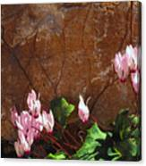 Persian Cyclamen Canvas Print