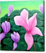 Persian Violet Cyclamen Canvas Print