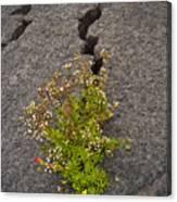 Persistent Flora Canvas Print