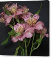 Peruvian Lily Canvas Print