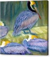 Peruvian Pelicans Two Pastel Canvas Print