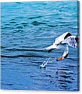 Pescando Vida Canvas Print