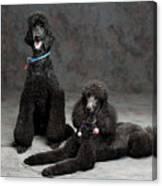 Pet Partners #346 Canvas Print