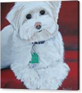 Pet Portrait Painting Commission Maltese Dog  Canvas Print