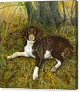 Pet Portrait - Springer Spaniel, Milly Canvas Print