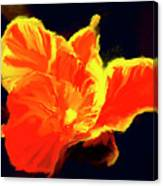 Petal Flare Canvas Print