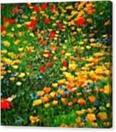 Poppy Petal Patch Canvas Print