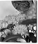 Petal Perch Canvas Print