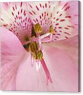 Petals Of Pink Canvas Print