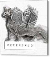 Peterbald Kitten 01 Canvas Print