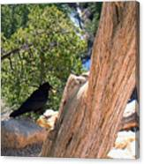 Petrified Raven At Grand Canyon Canvas Print