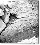 Petrified Wood #5 Canvas Print