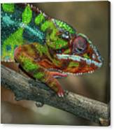 Ambilobe Panther Chameleon Canvas Print