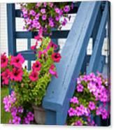 Petunias On Blue Porch Canvas Print