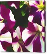 Petunias With A Flare Canvas Print