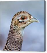Pheasant Hen Canvas Print
