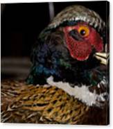 Pheasant In The Eye Canvas Print