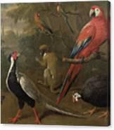 Pheasant Macaw Monkey Parrots And Tortoise  Canvas Print