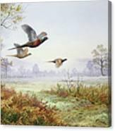 Pheasants In Flight  Canvas Print