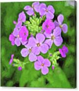 Phlox For You Canvas Print