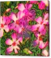 Phlox Fun - Pink Glow Canvas Print