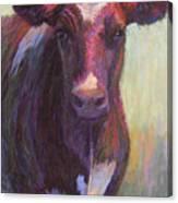 Phoebe Of Merry Mead Farm Canvas Print
