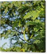 Photo Of Indian Tree Canvas Print