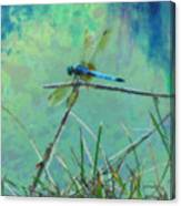 Photo Painted Dragonfly Canvas Print