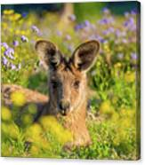 Photogenic Kangaroo Canvas Print