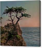 Photogenic Tree Canvas Print