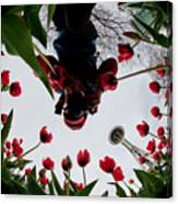 Photographer In Wonderland H084 Canvas Print