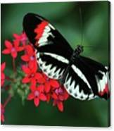 Piano Key Butterfly Canvas Print