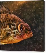 Pices In Aquarium Canvas Print