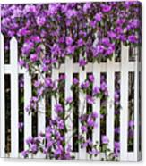 Picket Fence Rhododendron Canvas Print