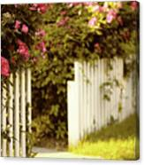 Picket Fence Roses Canvas Print