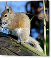 Picture Perfect Squirrel Canvas Print