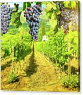 Picturesque Vineyard At Sunset Canvas Print