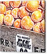 Pie Pumpkins For Sale Canvas Print