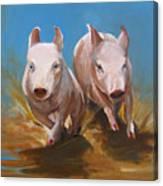 Pig Sooie Canvas Print