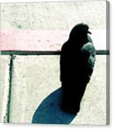 Pigeon Waits Canvas Print