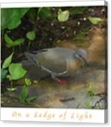Pigeon Poster Canvas Print