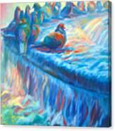 Pigeon Symphony Canvas Print