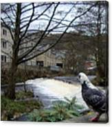 Pigeon Watch Canvas Print