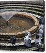 Pigeons Are In The Fountain Refreshes Canvas Print