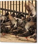 Pigeons In Venice Canvas Print