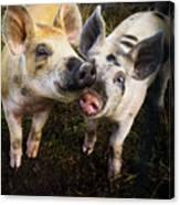 Piggy Love Canvas Print